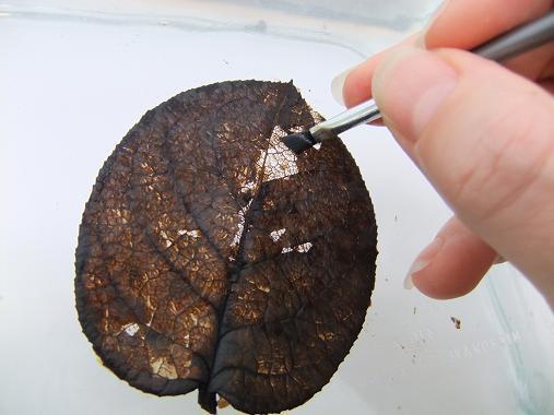 как сделать скелетированный лист
