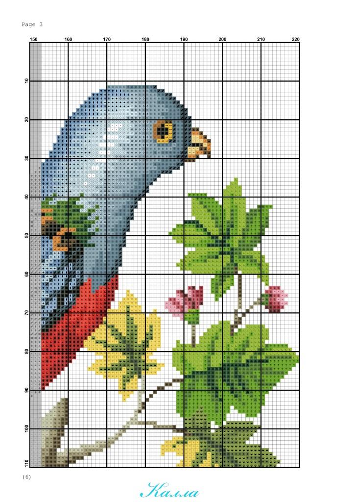 схема для вышивки попугай на ветке