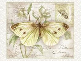 картинки бабочки красивые