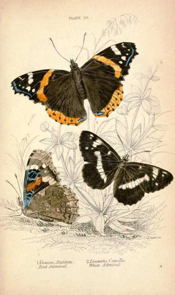 рисунки бабочек для декупажа