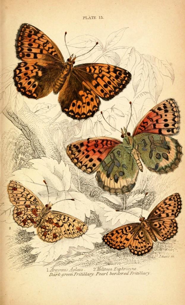 скачать картинки бабочек