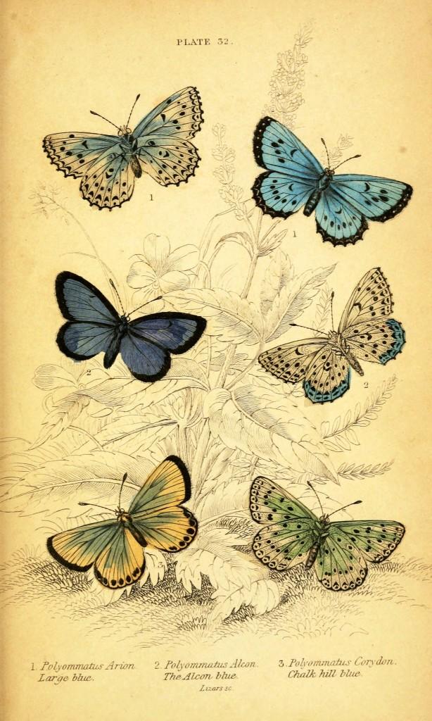 бабочки для декупажа интерьера шаблон