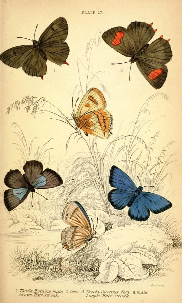 скачать бесплатно картинки бабочек