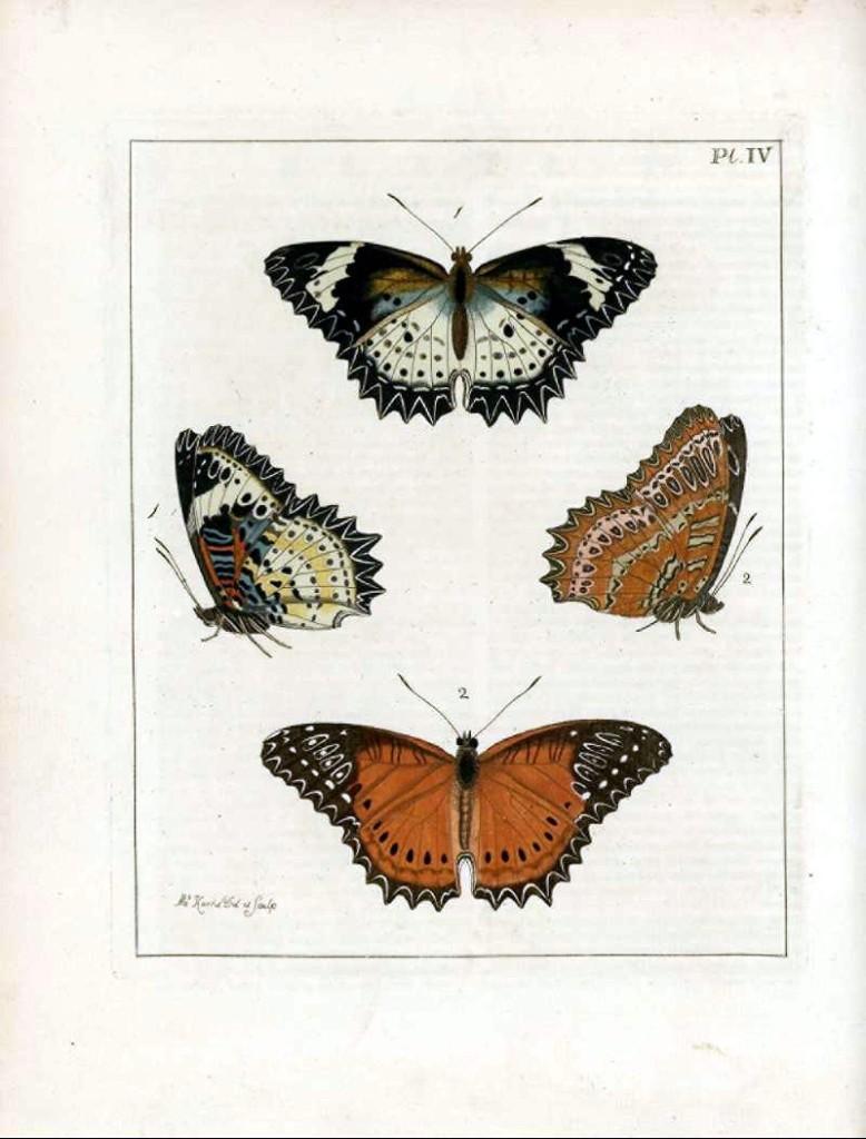 бабочки для декупажа