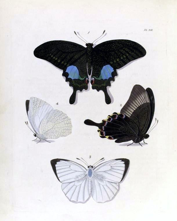 рисунки бабочки