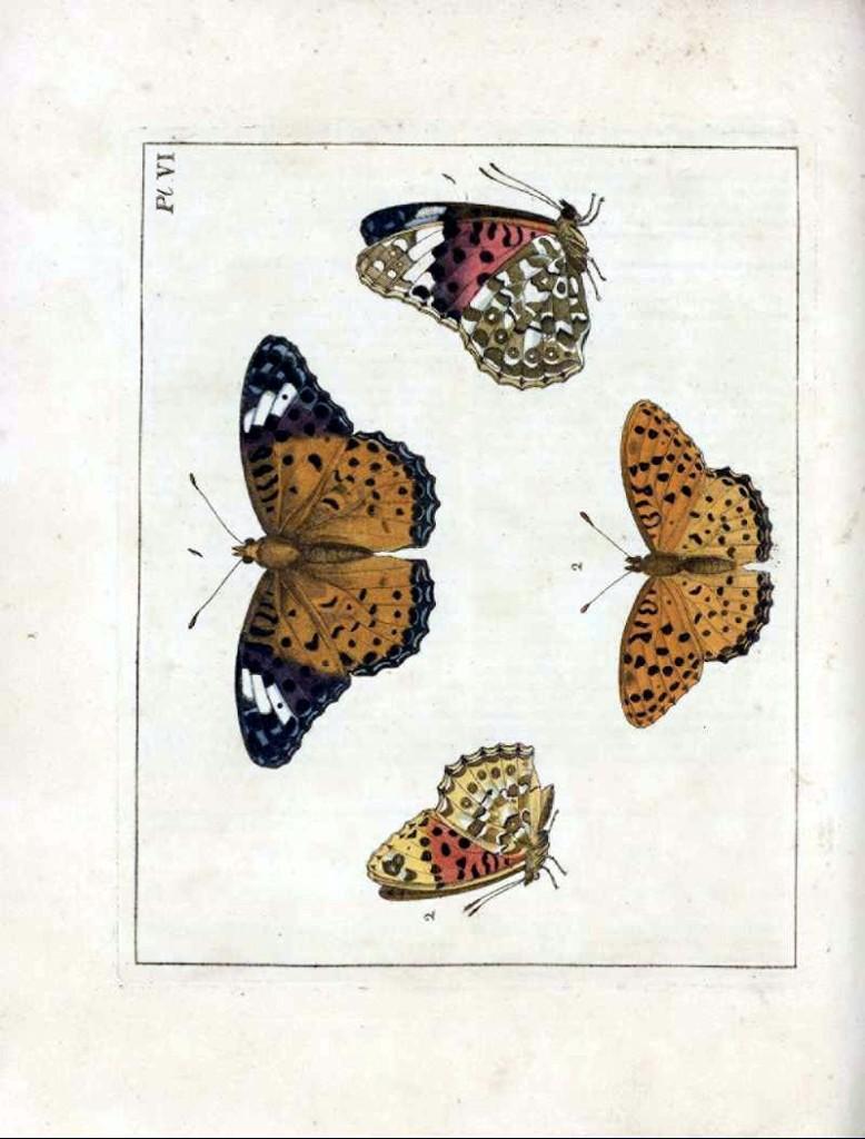 изображения бабочек