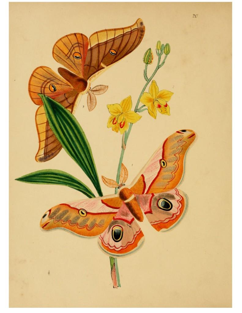 красивые картинки бабочек и цветов
