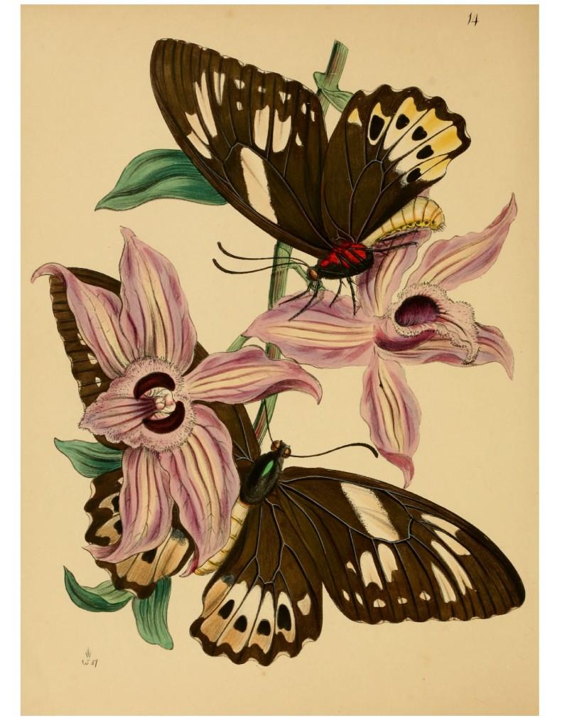 картинки для декупажа цветы и бабочки